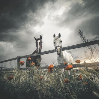 Фото Лошади в загоне под пасмурным небом