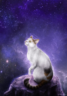 Фото Бело-рыжая кошка сидящая на камне смотрит вверх на фоне космоса, by KhaliaArt