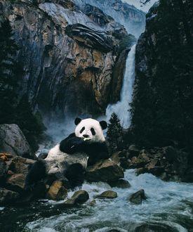 Фото Панда лежит на камнях возле водопада