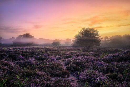 Фото Восход над вересковым полем, фотограф Pascal Schirmer