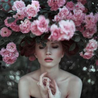 Фото Девушка стоит под кустом розовых роз, фотограф Nora Drugan