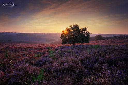 Фото Закат солнца над вересковым полем, Dark Heather, the Netherlands / Темная Хизер, Нидерланды, фотограф Martin Podt