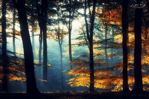 Фото Осенний утренний лес, фотограф Martin Podt