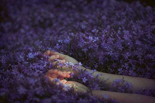 Фото Руки лежат на сиреневых цветах