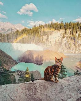 Фото Бенгальская кошка Саки на фоне природы