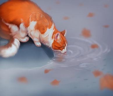 Фото Бело-рыжий кот пьет воду из пруда в котором плавают осенние листья, by Follovtpws