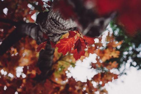 Фото Осенние листочки на дереве, фотограф Rona Keller