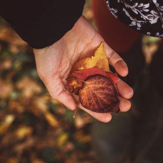 Фото Осенние листья в руке
