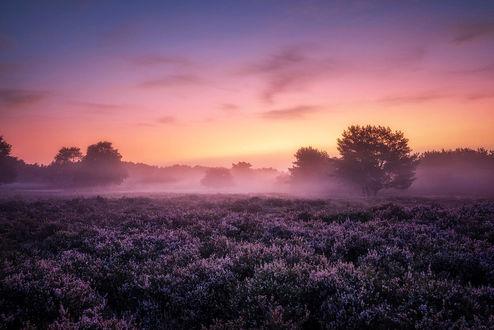 Фото Фиолетовый закат над вересковым полем, фотограф Pascal Schirmer