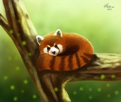 Фото Панда лежит на дереве, by Witse99