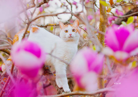 Фото Кот среди веток магнолии, by Lain-AwakeAtNight
