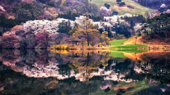 Фото Беседка на озере в окружении деревьев, фотограф Tiger Seo