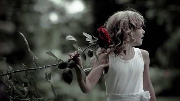 Фото Девочка в белом платье держит в руке розу алую розу