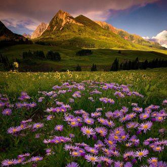 Фото Сиреневые и другие полевые цветы в долине перед горами