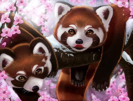 Фото Две красные панды лежат на ветке цветущего дерева, by Dyewind