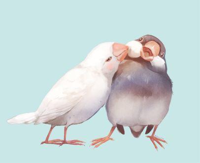 Фото Два попугайчика на голубом фоне