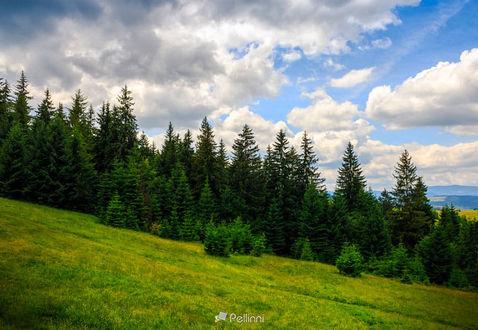 Фото Склон горного хребта с хвойным лесом, фотограф Mike Pellinni