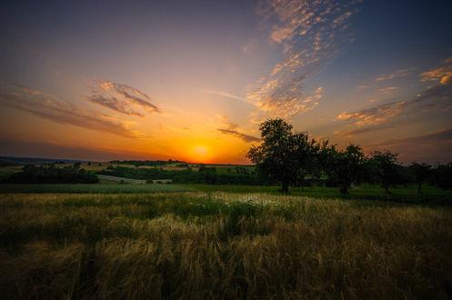 Фото Красивый закат над зеленым полем с деревьями, фотограф Ralf Thomas