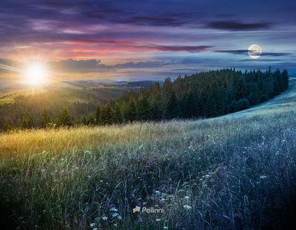 Фото Большой луг с травами, деревья в горной местности, фотограф Mike Pellinni