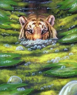 Фото Тигр в воде, by Vanory