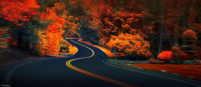 Фото Извилистая дорога среди ярких осенних деревьев, фотограф konstantinos metallinos