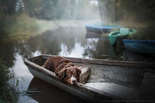 Фото Пес лежит в лодке, Фотограф Анна Аверьянова