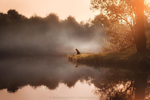 Фото Пес сидит на берегу перед вечерним озером, Фотограф Анна Аверьянова