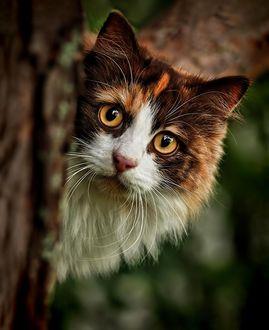 Фото Кошка выглядывает из-за дерева