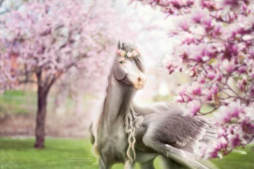 Фото Крылатая лошадь в веночке в саду магнолий, by Ladyperfume