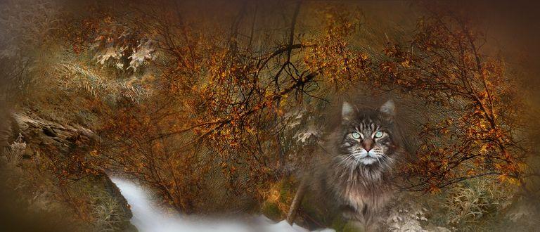 Фото Кошка на фоне осеннего пейзажа
