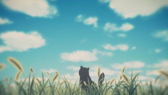 Фото Кот сидит в траве на фоне облачного неба, кадр из аниме Она и ее кот: Все меняется / Kanojo to Kanojo no Neko: Everything Flows