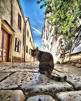 Фото Кошка сидит на булыжной мостовой