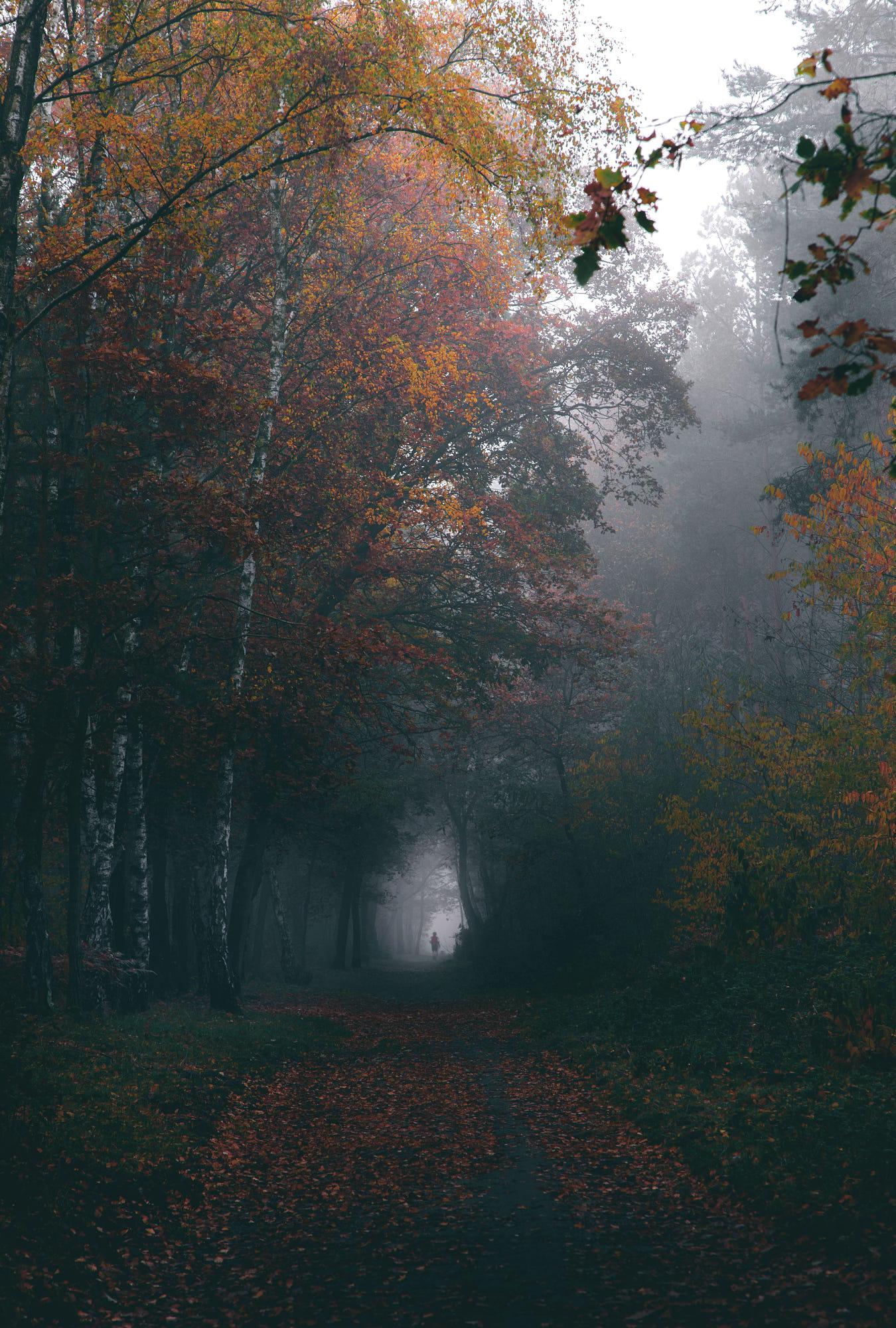 Фото Дорожка в осеннем лесу, by Denny Bitte