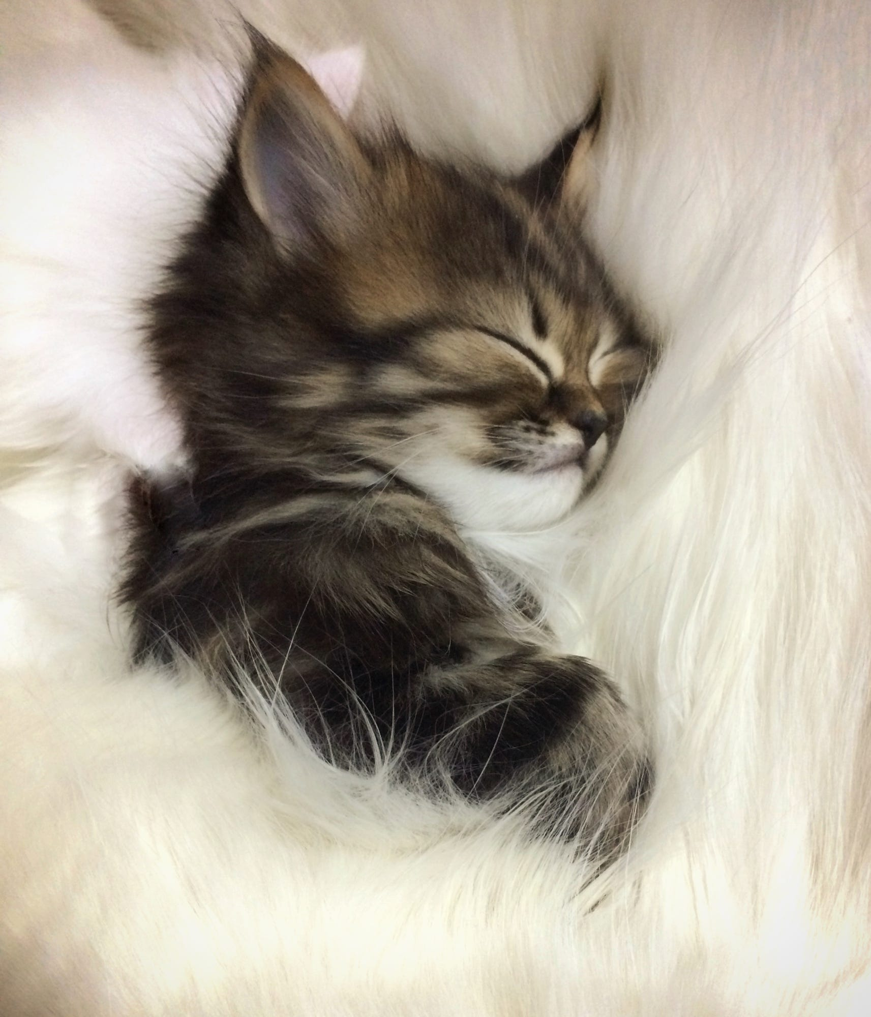 Спокойной ночи котенок картинки красивые, поздравление
