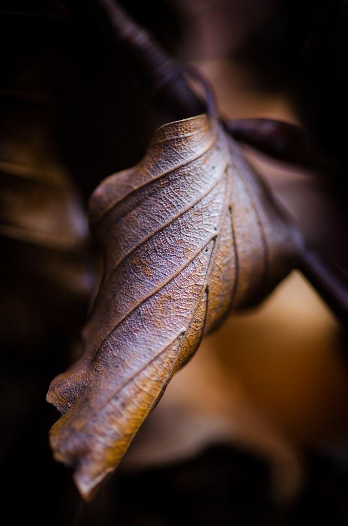 Фото Осенний листок крупным планом