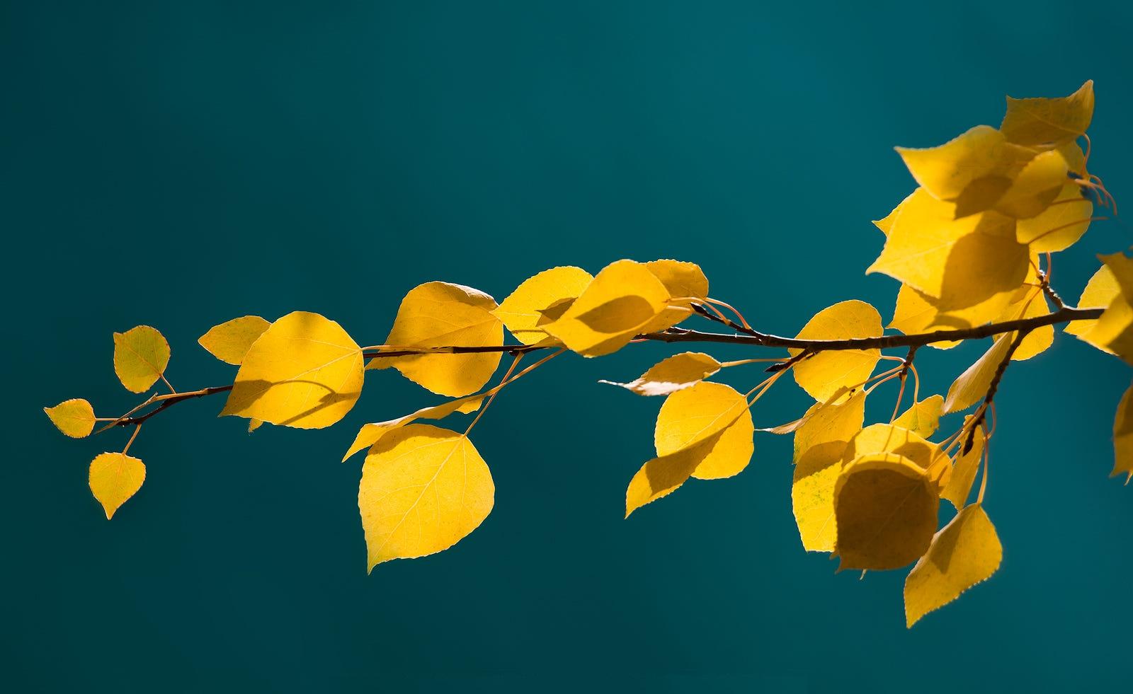 Фото Осенняя ветка с листочками, фотограф Greg Boratyn