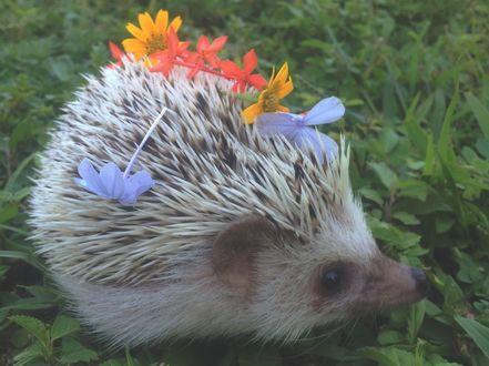Фото Ёжик с цветами на иголках сидит в траве