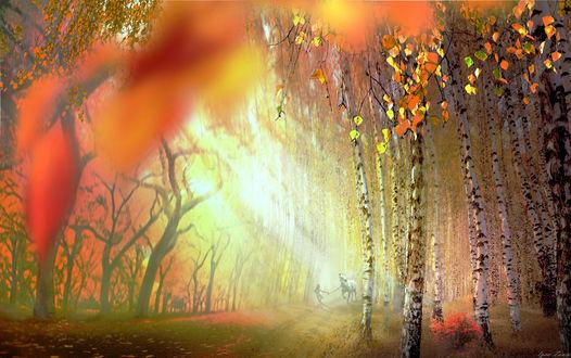 Фото Осенняя природа в солнечных лучах, фотохудожник Игорь Зенин