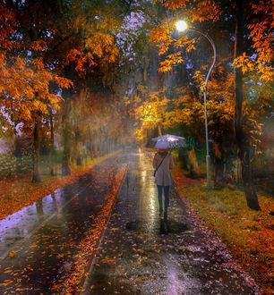 af9816419da Фото Дождь в осеннем парке. Фотограф Гордеев Эдуард