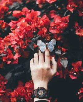 Фото Бабочка на руке человека