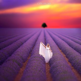 Фото Девушка в белом платье стоит в лавандовом поле, by Pier Luigi Saddi