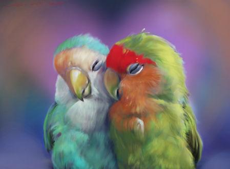 Фото Прижавшиеся к друг другу разноцветным попугаи, by nosoart