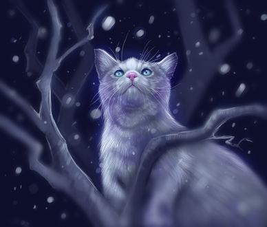 Фото Кошка на дереве под падающим снегом, by Followthepaws