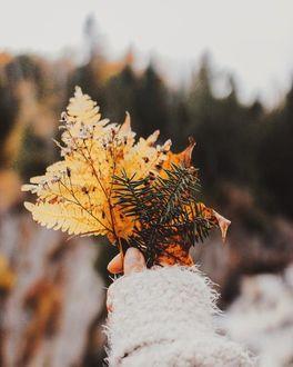 Фото В руке девушки осенние листья и еловая веточка