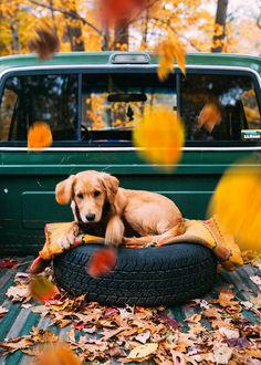 Фото Собака в авто под падающей листвой