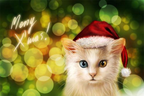 Фото Белый котенок с цветными глазами в красном колпаке на фоне боке (Merry Xmas / Счастливого рождества), by NImportant
