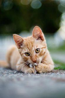 Фото Рыжий котенок лежит на земле, боке фон