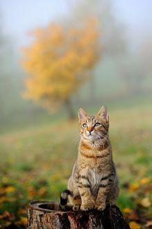 Фото Полосатый кот сидит на пеньке на фоне осенней природы