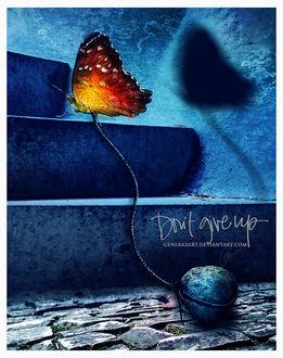 Фото Бабочка соединена с камнем, by Gene Raz von Edler