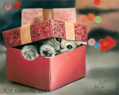 Фото Котенок сидит в подарочной коробке, by Kim Rouisse